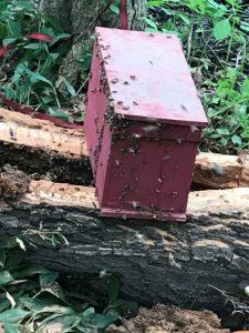 honeybee8